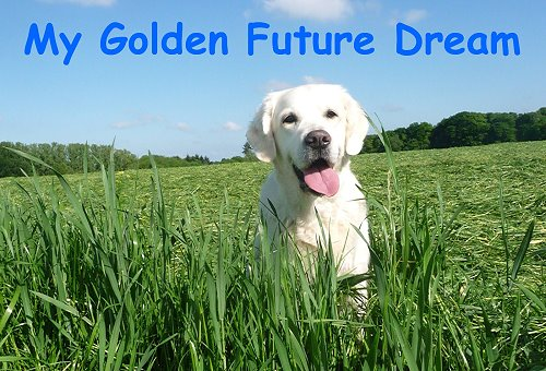 My Golden Future Dream
